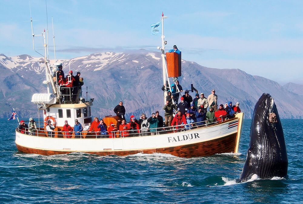 Excursion de ballenas Husavik