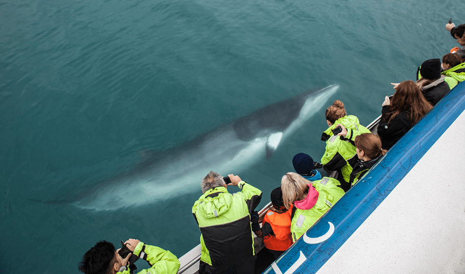 tour ballenas reykjavik