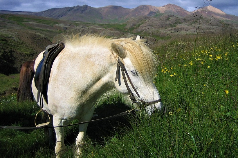 caballos islandia excursion