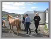 Trabajo en Islandia - finca - caballos