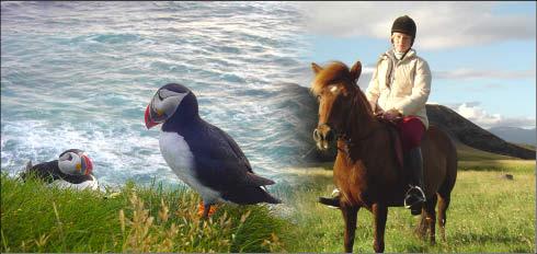 foto de frailecillos y caballo